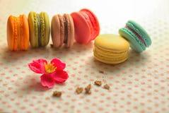Macarons jest Francuskim cukierki opierającym się zdjęcie royalty free