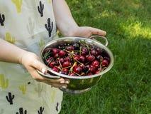 Macarons multicolores du plat rose sur une table foncée tasse blanche de thé ou de café petit déjeuner avec le dessert Bouquet de photos stock