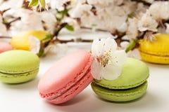 Macarons su fondo bianco contro del branc sbocciante dell'albicocca Fotografia Stock
