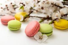 Macarons su fondo bianco contro del branc sbocciante dell'albicocca Fotografie Stock