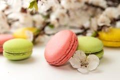 Macarons su fondo bianco contro del branc sbocciante dell'albicocca Fotografia Stock Libera da Diritti