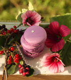 Macaroon. With flowers and berries on a summer veranda Stock Image