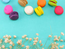 Macaroons with dryied flower and copy space background Royalty Free Stock Image