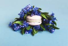 Macarrones suaves dulces con las flores Fotografía de archivo