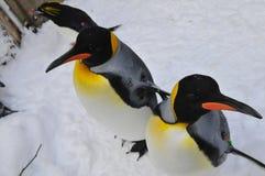 Macarrones y rey pingüinos imagen de archivo libre de regalías