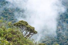 Macas, Andes. Ecuador. Clouds envelop the hills near Macas, Andes. Ecuador Stock Photography
