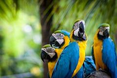 Macau. Parrot in jungle Stock Image