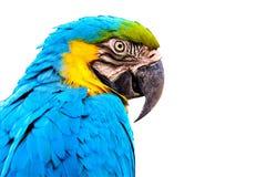 Macaw που απομονώνεται στο άσπρο υπόβαθρο στοκ φωτογραφίες με δικαίωμα ελεύθερης χρήσης