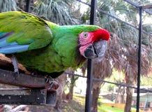 Macaw που στέκεται στο φραγμό μετάλλων Στοκ φωτογραφία με δικαίωμα ελεύθερης χρήσης
