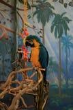 Macaw σε ένα κατάστημα κατοικίδιων ζώων στο Ντένβερ στοκ εικόνα