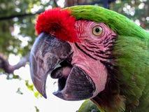 Macaw στο κλουβί Στοκ Φωτογραφία