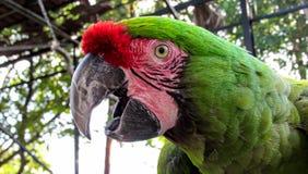 Macaw στο κλουβί Στοκ εικόνα με δικαίωμα ελεύθερης χρήσης