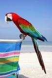 macaw пляжа Стоковые Изображения RF