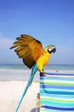 macaw пляжа стоковая фотография