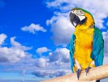 Macaw против неба стоковое изображение