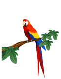 macaw птицы Стоковое Фото