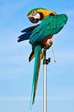 macaw птицы стоковые изображения rf