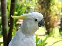 Macaw 1. Close-up macaw stock photo
