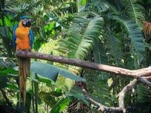 macaw Lizenzfreies Stockfoto