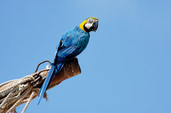Macaw Images stock