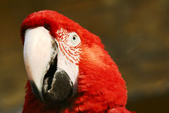 Macaw Stock Photo