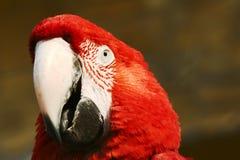 Macaw Stock Photo