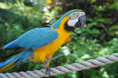 Macaw Stockfotos