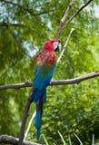 macaw стоковая фотография