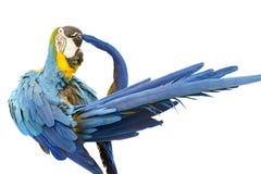 Macaw Stock Image
