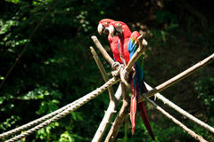 Macaw photographie stock libre de droits