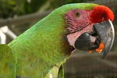 macaw стоковые фото