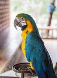 Macaw Стоковое фото RF
