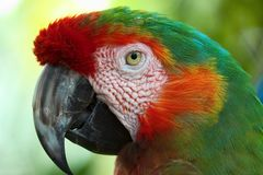 Macaw. Parrot Stock Photos