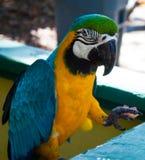 Macaw Fotografía de archivo
