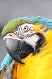 Macaw stock photos