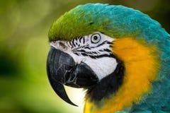 Macaw Fotos de archivo