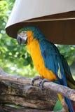 Macaw Imágenes de archivo libres de regalías