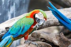 macaw Stockbilder