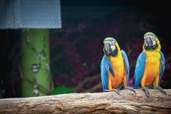 macaw Stockbild
