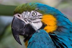 macaw Στοκ Εικόνες