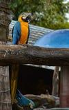 macaw Stock Afbeelding