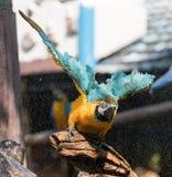 macaw Image stock