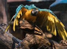 macaw Photos libres de droits