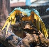macaw Photo stock