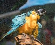 macaw Fotografering för Bildbyråer