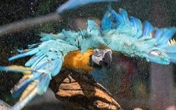 macaw Royaltyfri Fotografi