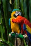 macaw Stockfoto