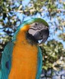macaw Στοκ φωτογραφίες με δικαίωμα ελεύθερης χρήσης