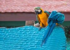 Macaw Foto de archivo libre de regalías