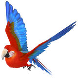 Macaw. 3 D Render of an beautyful Macaw Stock Images